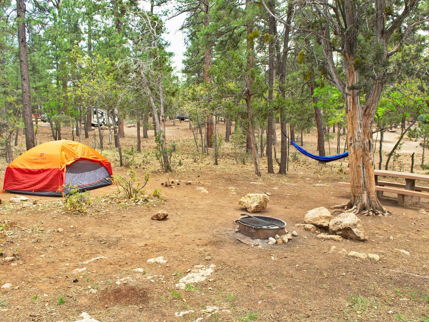 Picnic table, fire pit, tent, and hammock, Mather CampgroundThe picnic table, fire pit tent, and hammock, Mather Campground