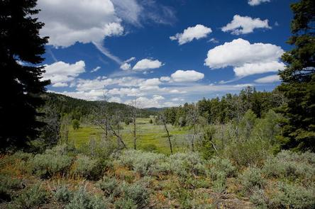 ASPEN CABINFluffy white clouds in a blue sky above a meadow surrounded by sage and conifer trees.