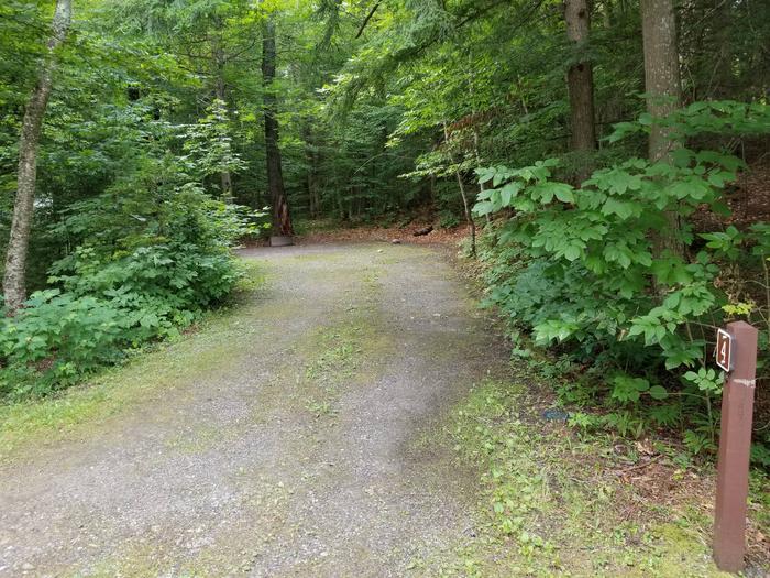 campsite in wooded areacampsite 4