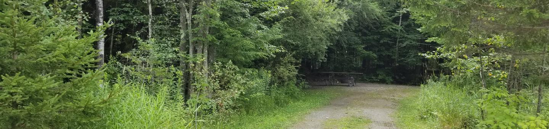campsite in wooded areacampsite 5