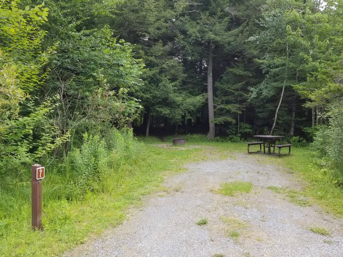campsite with picnic table and fire pit in wooded areacampsite 7
