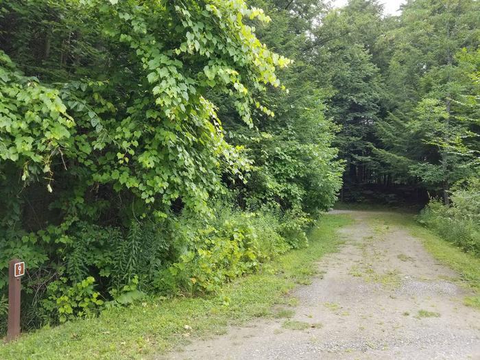 campsite in wooded areacampsite 9