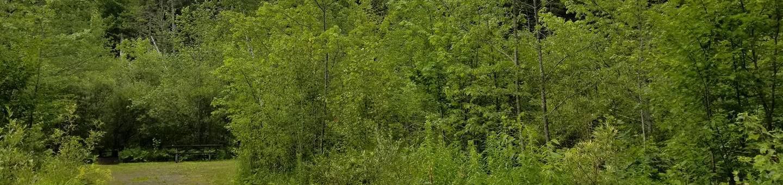 campsite in wooded areacampsite 10