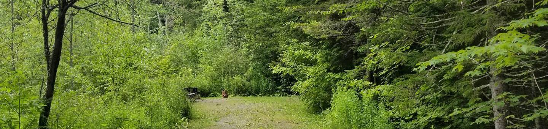 campsite in wooded areacampsite 11