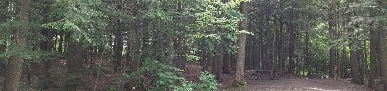 campsite in wooded areacampsite 12
