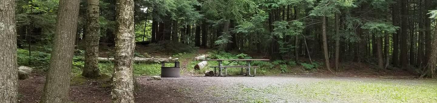 campsite with picnic table and fire ring in wooded areacampsite 14