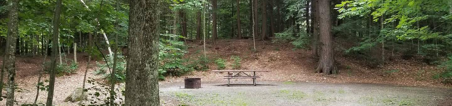 campsite with picnic table and fire ring in wooded areacampsite 22