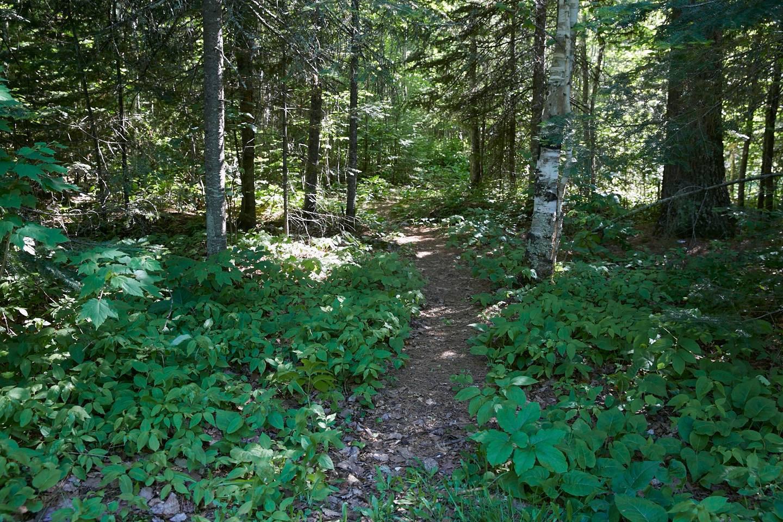 Path in woodsHiking path
