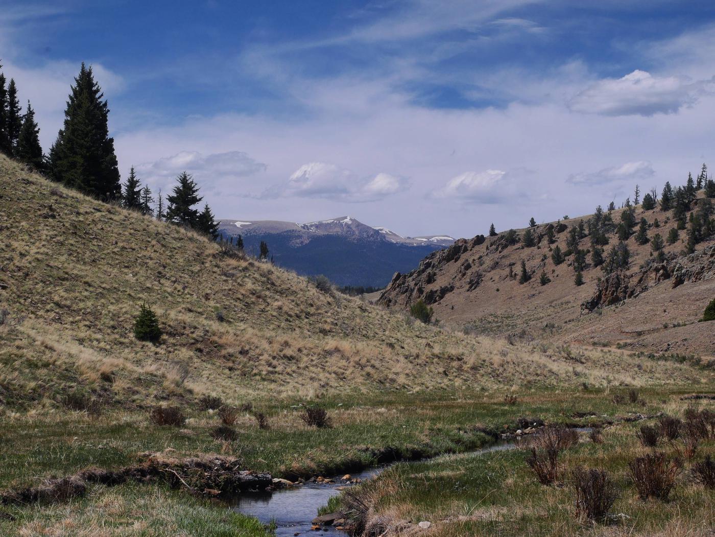 Valle Vidal UnitComanche Creek