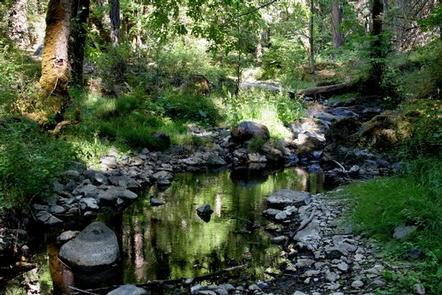 Small creek in the forest with rocky shoreline.BEAVER SULPHUR