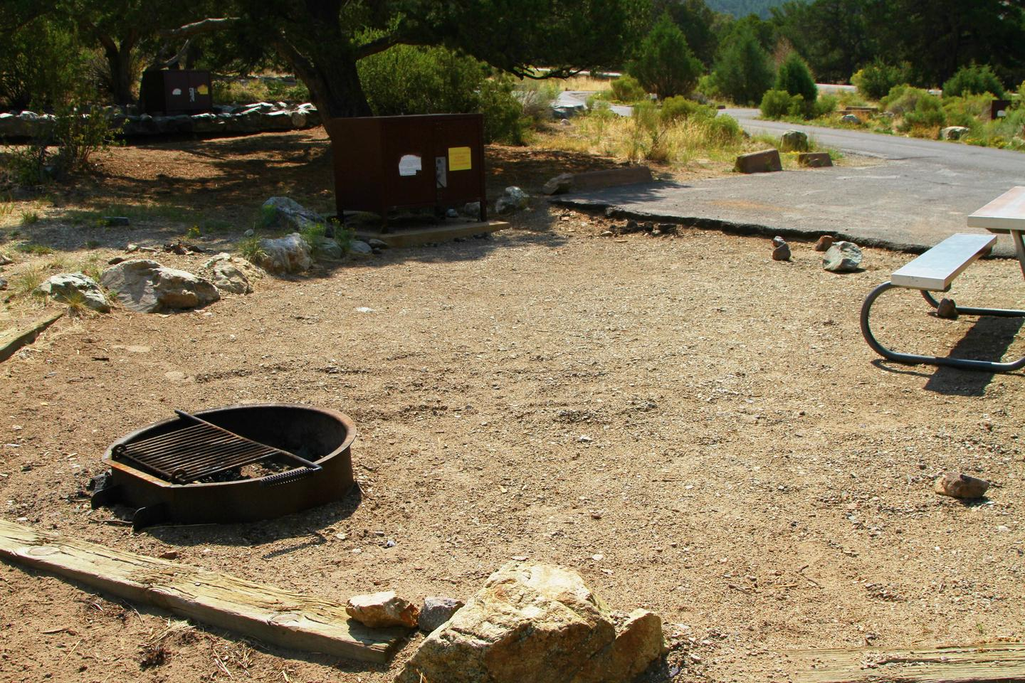 Site #41, Pinon Flats Campground