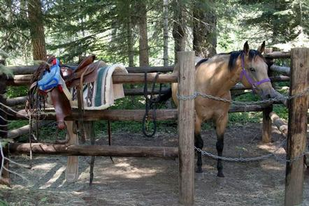 Saddle on corral railing in front of buckskin horse with purple halter looking  toward camera.WILLOW PRAIRIE HORSECAMP