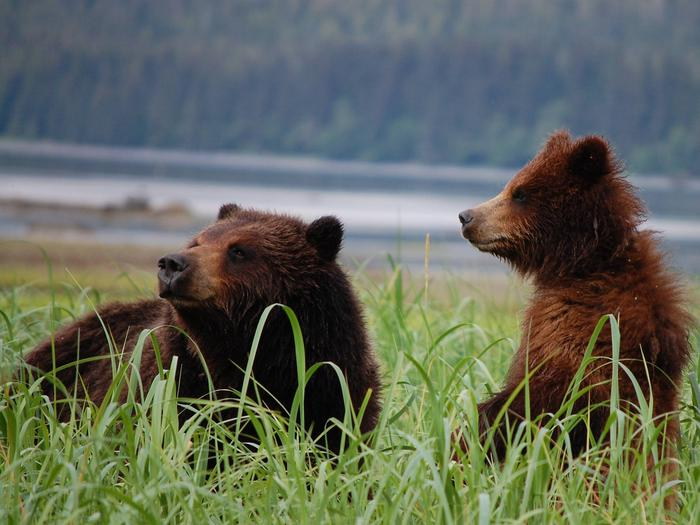 Preview photo of Pack Creek Bear Viewing Area