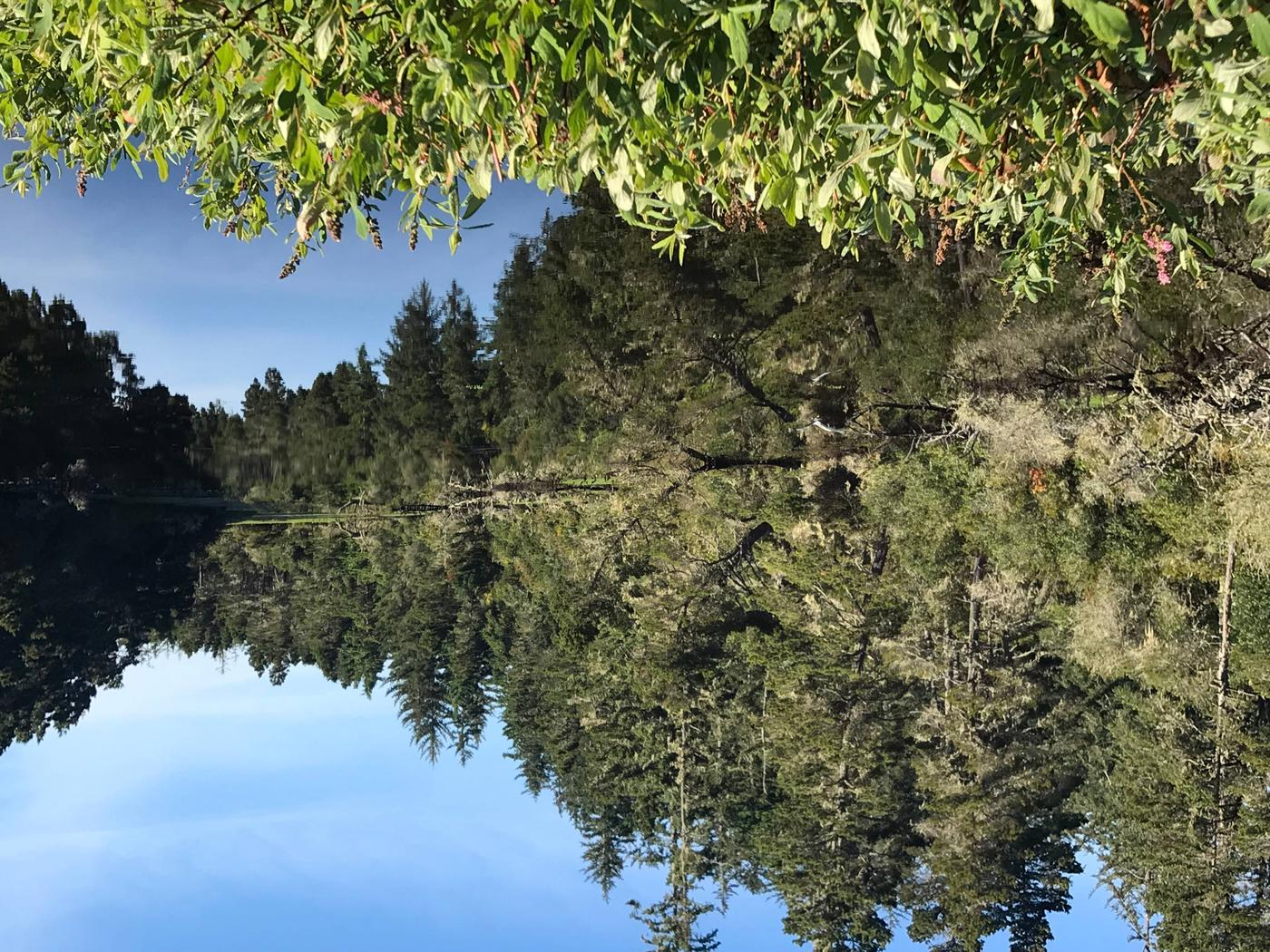 Conifer trees reflected on still lake under blue sky.LAGOON CAMPGROUND