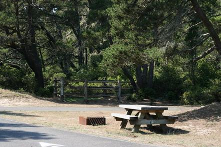 Picnic table and fire pit next to paved road and shore pine forest.WILD MARE HORSE CAMP
