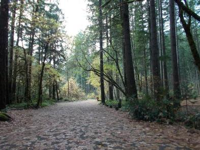 Leaf covered, flat, paved road running straight through mixed conifer forest.BOGUS CREEK CAMPGROUND