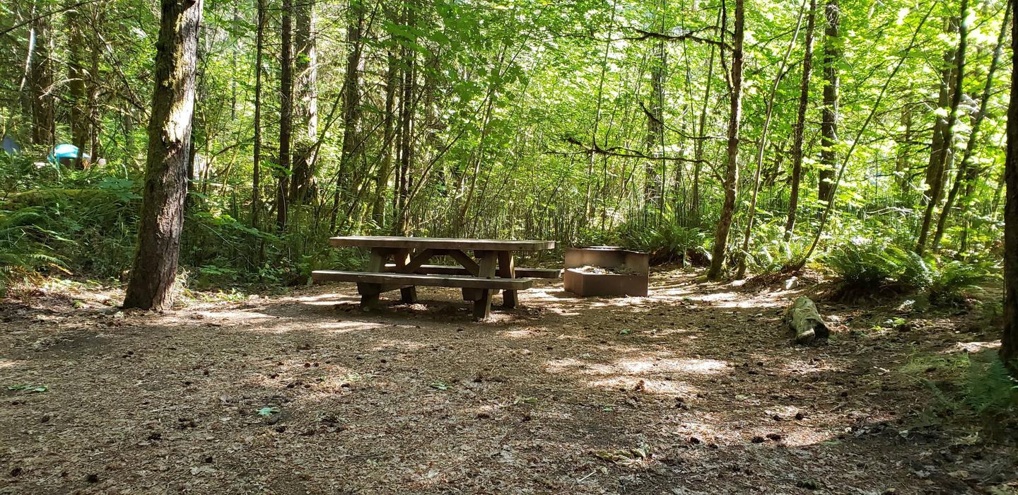 Secluded picnic Table and fire ring next to a sun dappled thicket.Horseshoe Bend Campground