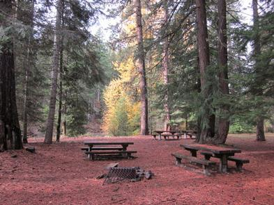 Picnic tables, fire ring, flat needle covered ground in conifer forest with bright yellow cottonwood trees in background.KANER FLAT GROUP SITE