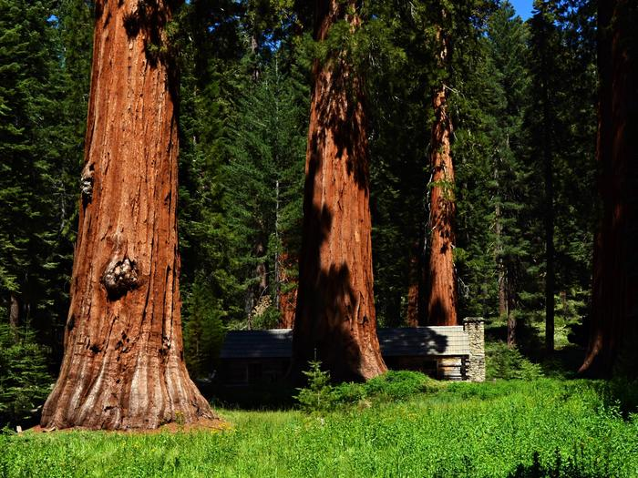 Preview photo of Mariposa Grove Commercial Bus Parking