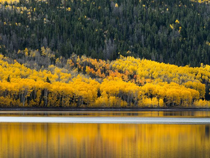 Preview photo of Fishlake National Forest
