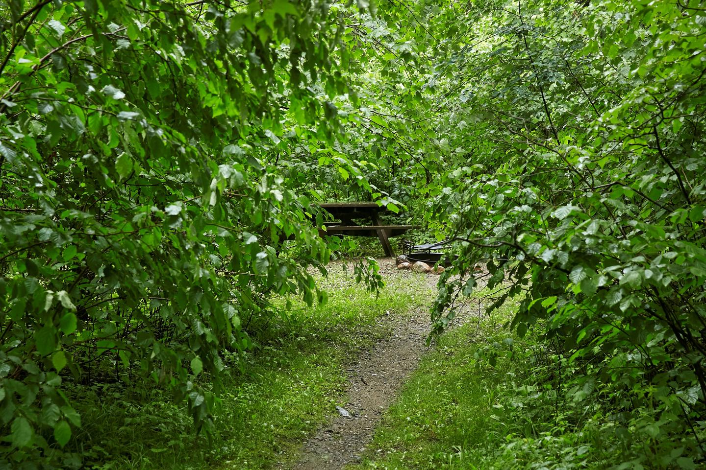 Path to camp