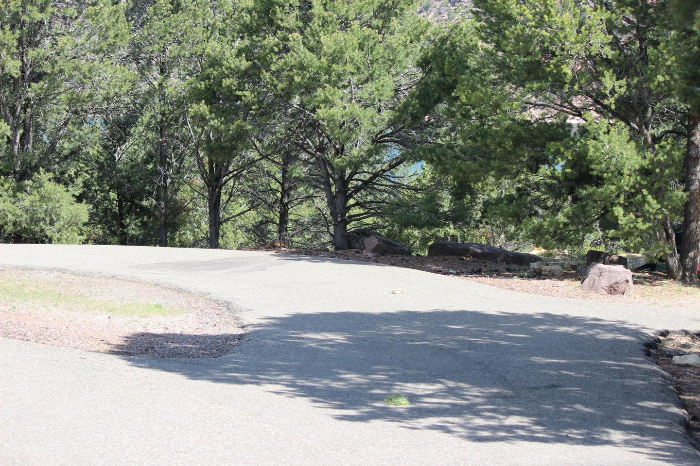The road and trees that are in the vicinity of the campsite.Cedar Springs Campground: Site 8