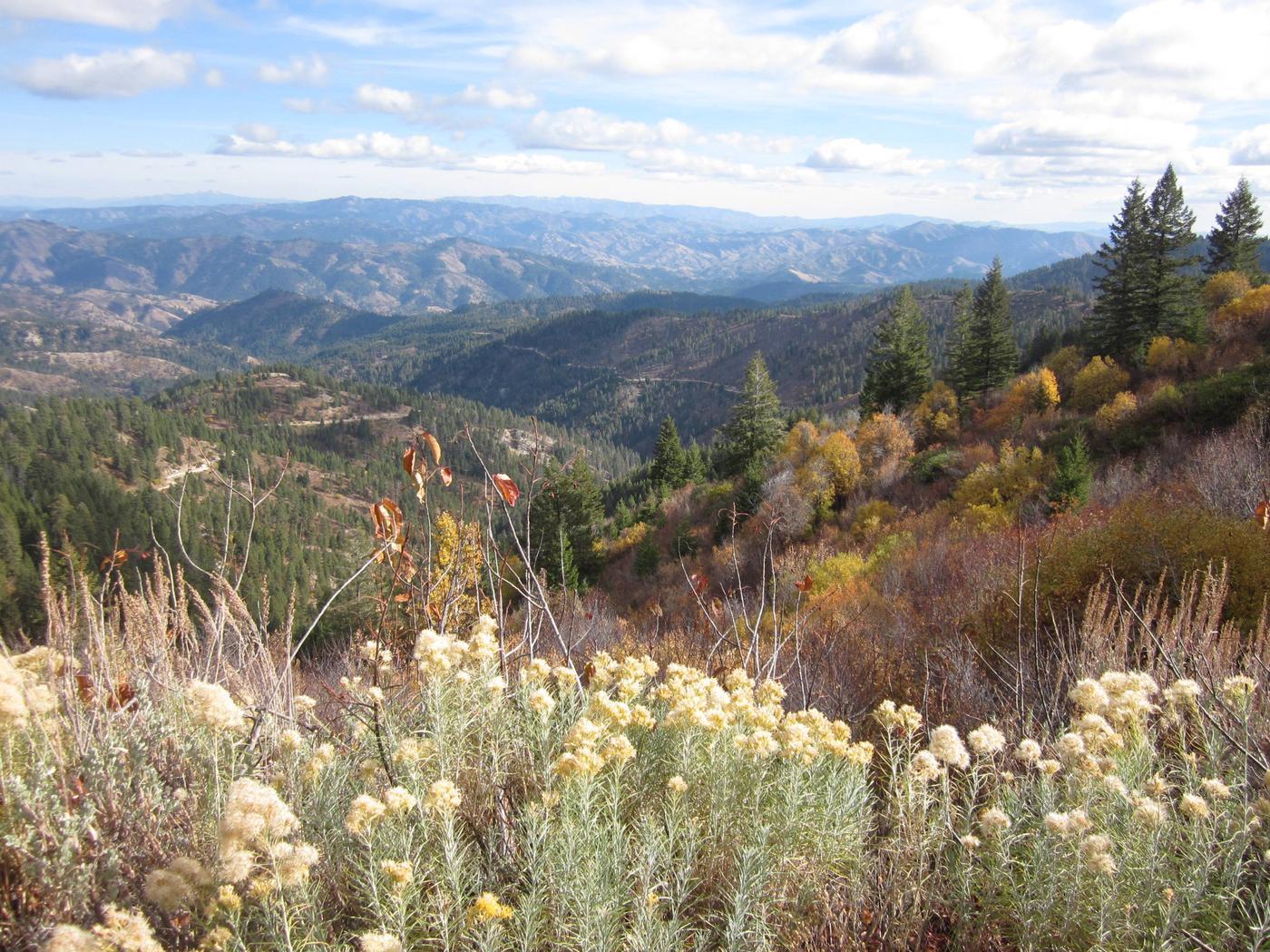 Boise National Forest