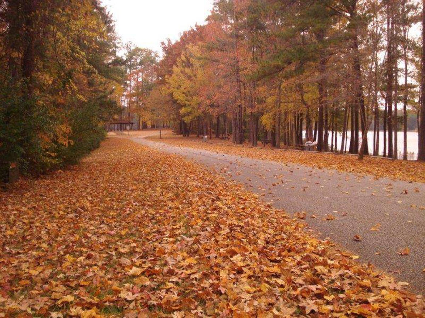 This is why they call it fallthis is why they call it fall