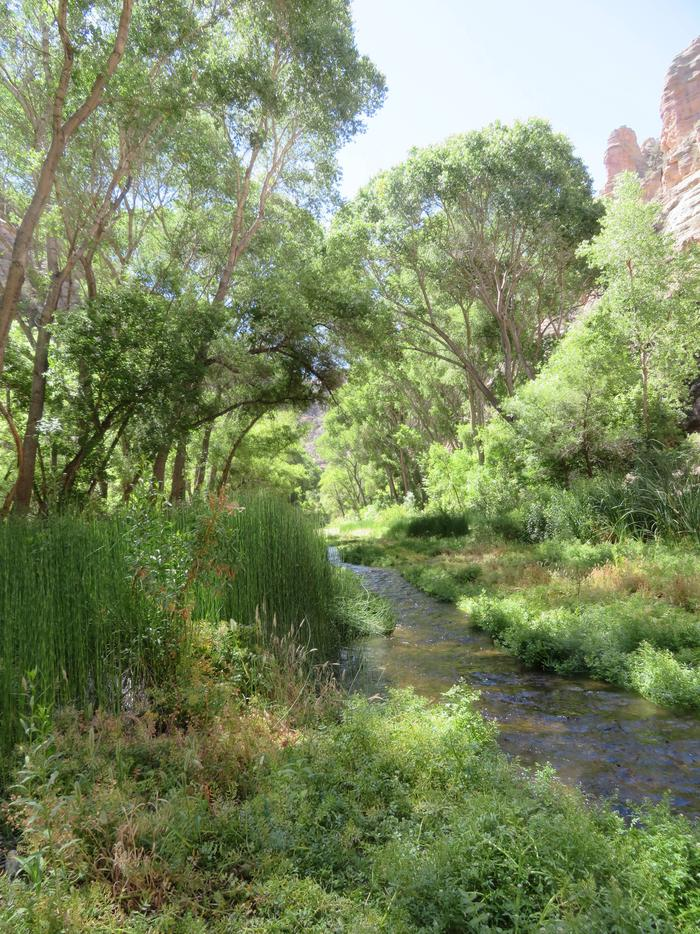 Aravaipa Canyon WildernessThere are no maintained trails in Aravaipa Canyon Wilderness. Lush vegetation makes hiking in the creek the best option.