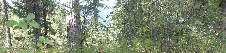 HAuse Creek CampgroundCampsite 23