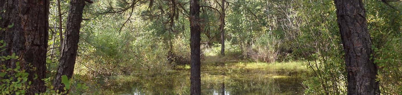 Hause Creek CampgroundCampsite 25