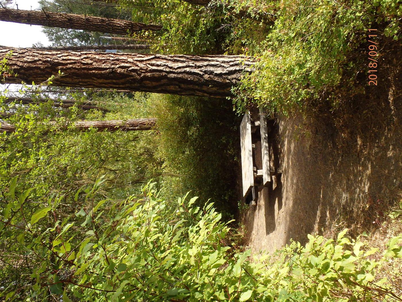 Hause Creek CampgroundCampsite 32