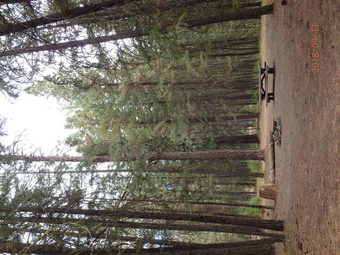 Hause Creek CampgroundCampsite 36