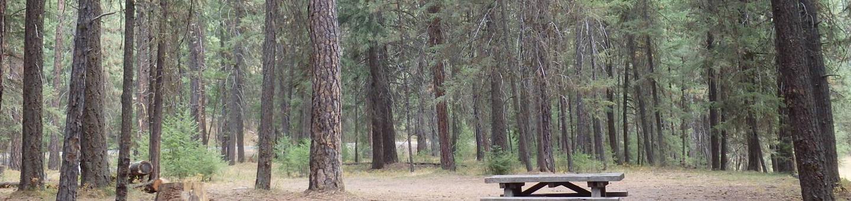 Hasue Creek CampgroundCampsite 36