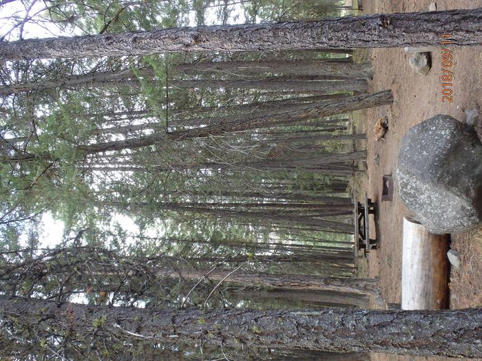 Hause Creek CampgroundCampsite 37