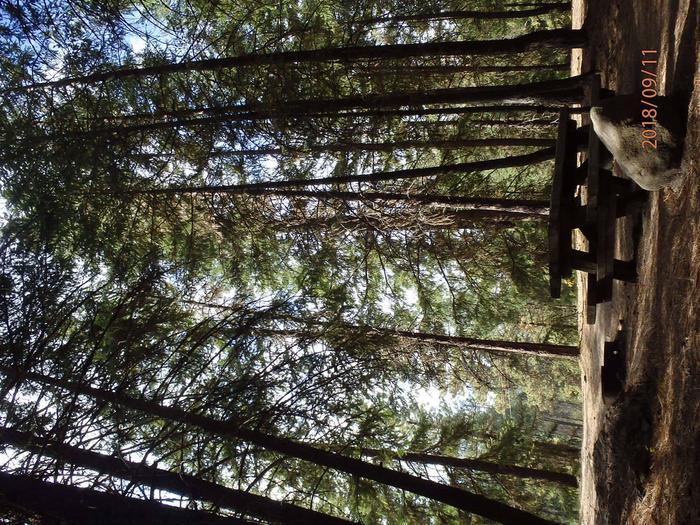 Hause Creek Campground Campsite 40