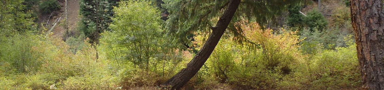Willows CampgroundA hidden Gem with Views