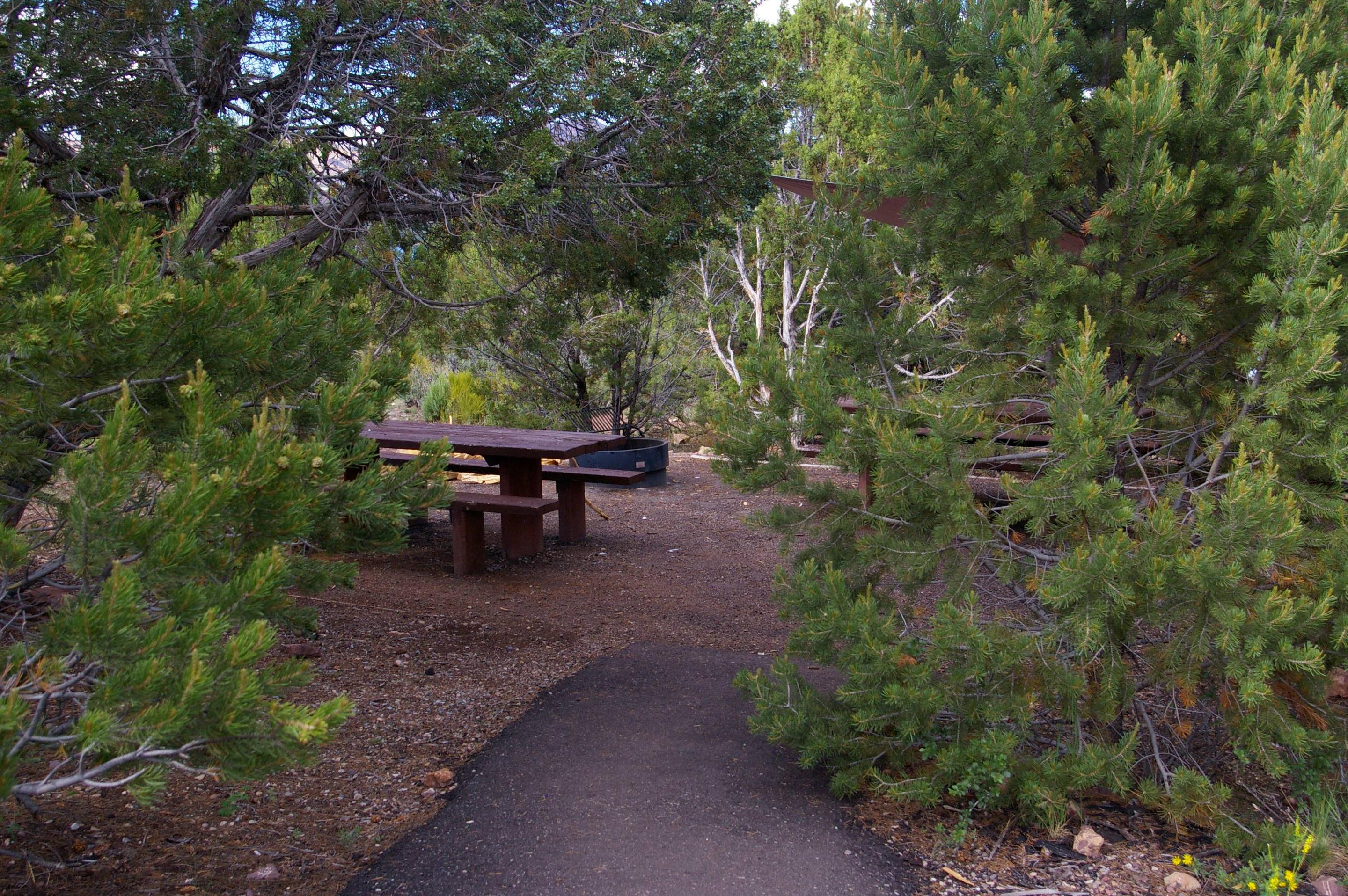 Picnic table tuck away in the middle of a group of trees. An asphalt path leads up to the area.Cedar Springs Campground