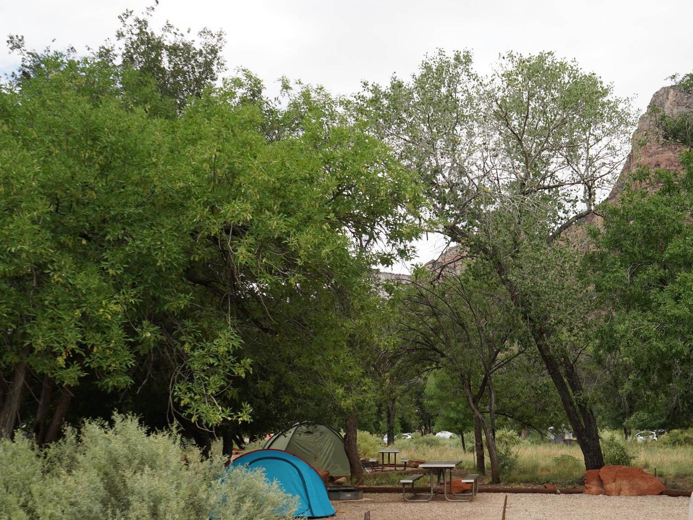 Campsite areaC11