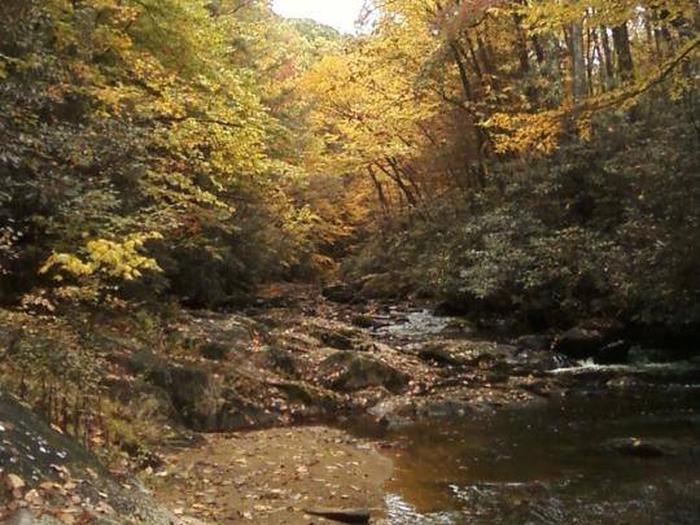 Laurel Fork at Dennis Cove Campground
