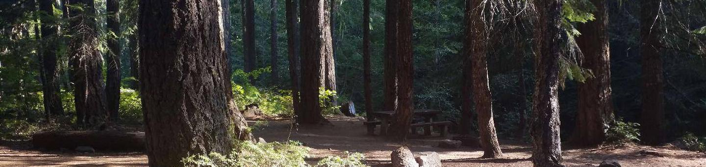 Campsite in flat, sun dappled conifer forest.Kachess Campground