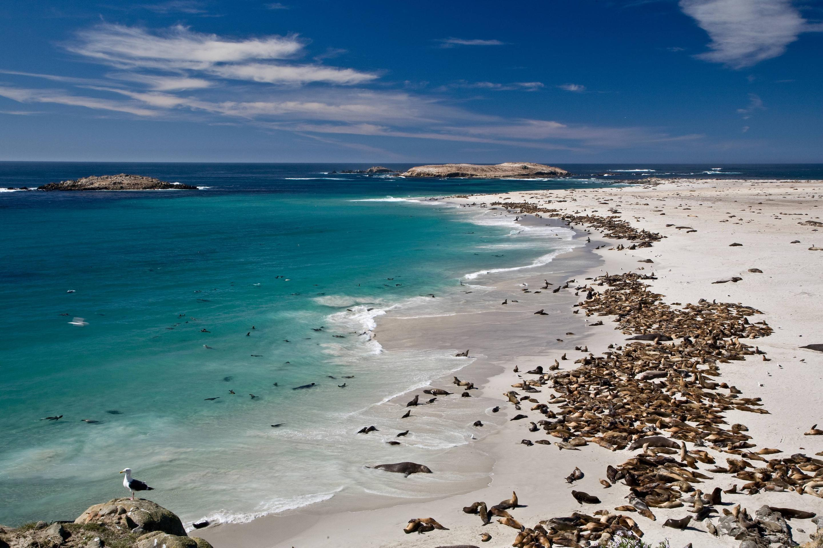 Point Bennet by Tim HaufPoint Bennet, San Miguel Island: One of the greatest concentrations of wildlife in the world occurs on San Miguel with over 100,000 pinnipeds gathering to breed, pup, and rest.