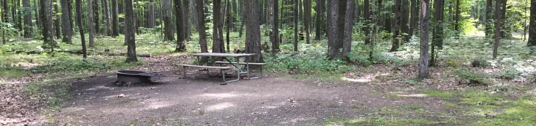 Tracy Ridge Recreation Area: Campsite 92