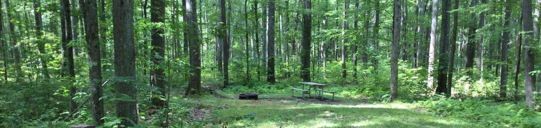 Tracy Ridge Recreation Area: Campsite 94