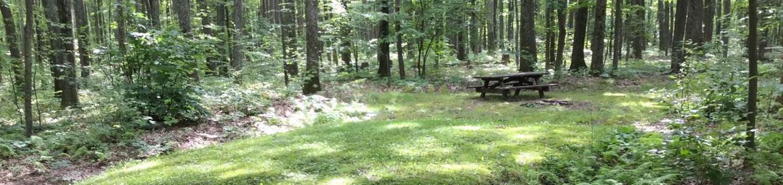 Tracy Ridge Recreation Area: Campsite 95