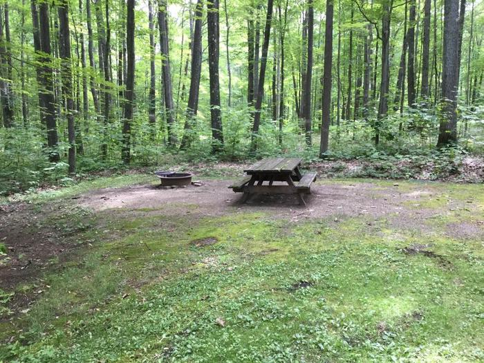 Tracy Ridge Recreation Area: Campsite 98