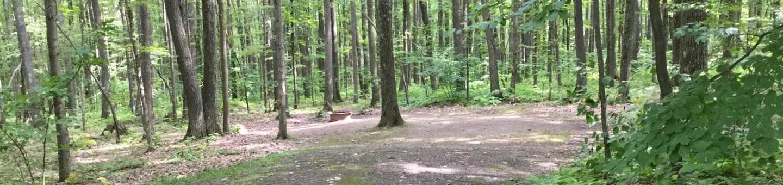 Tracy Ridge Recreation Area: Campsite 99