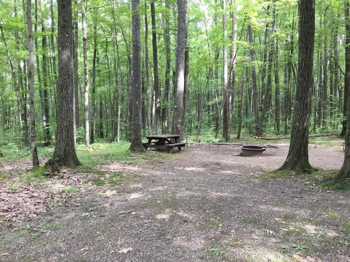 Tracy Ridge Recreation Area: Campsite 100