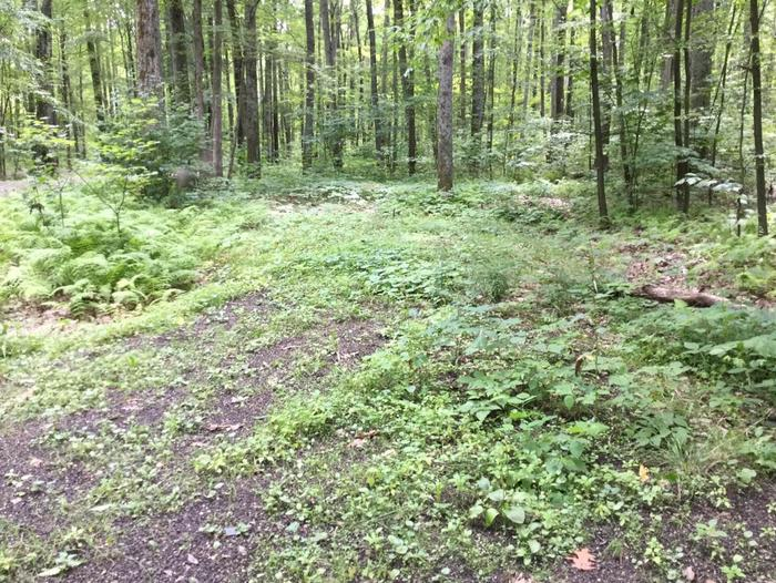 Tracy Ridge Recreation Area: Campsite 101- Not In Use