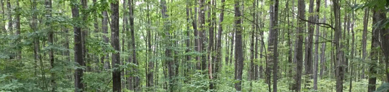 Tracy Ridge Recreation Area: Campsite 104 (not in use)